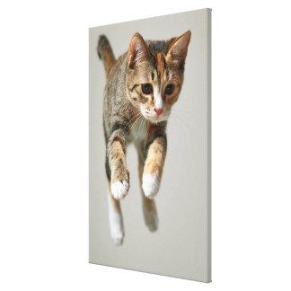 Toile Sauter de chat de calicot