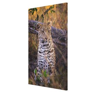 Toile Séance de léopard, Botswana, Afrique