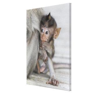 Toile Singe de Macaque