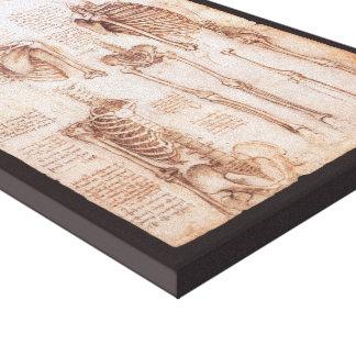 Toile Squelettes humains d'anatomie par Leonardo da