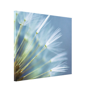 Toile Tête de graine de pissenlit de fleur
