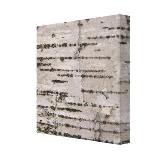 Toile Texture d'arbre de bouleau