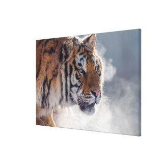 Toile Tigre un matin froid