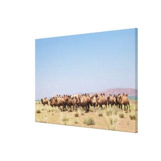 Toile Troupeau de chameaux Bactrian