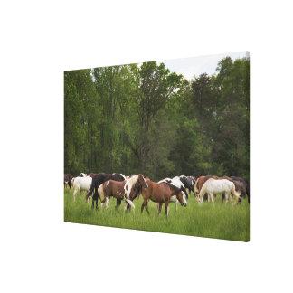 Toile Troupeau de chevaux, Tennessee