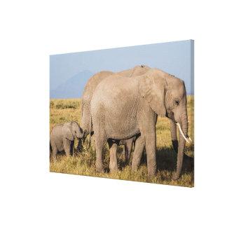 Toile Troupeau d'éléphant avec des jeunes