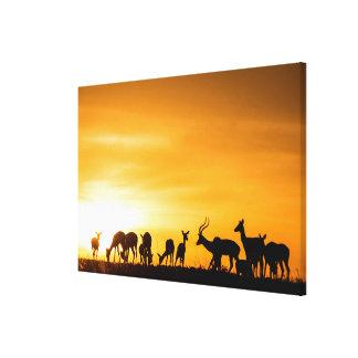 Toile Troupeau d'impala au coucher du soleil