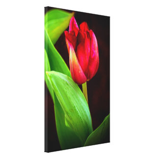 Toile Tulipe attrapée dans la lumière