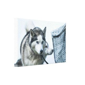 Toile Un beau chien de chien de traîneau sibérien avec