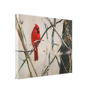 Toile Un oiseau cardinal rouge sur une branche dans les
