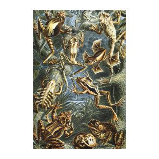 Toile Variété d'Ernst Haeckel de grenouilles exotiques :