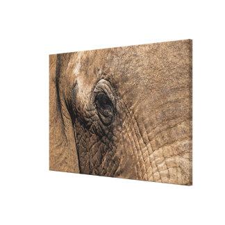 Toile Visage d'un éléphant