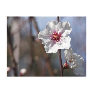 Toile White flower in natural light