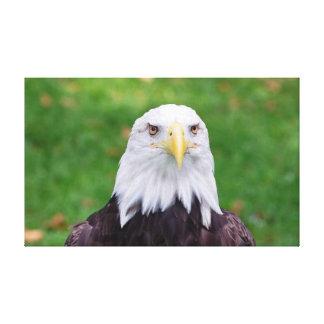 Toile Yeux d'Eagle