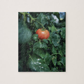 Tomate Puzzle