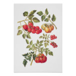 Tomates Posters