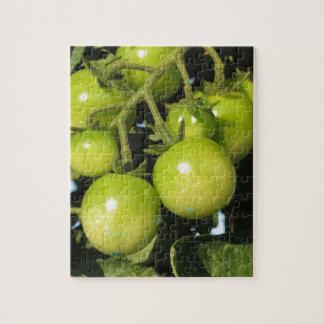 Tomates vertes accrochant sur le plante dans le puzzle