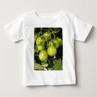 Tomates vertes accrochant sur le plante dans le t-shirt pour bébé