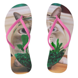 Tongs Chat et poissons - chat - chats drôles - chat fou