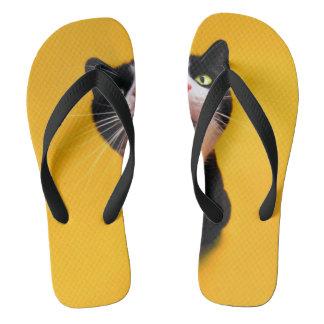 Tongs Chat noir et blanc de chaton-animal familier de