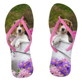 Tongs Chiot tricolore mignon de chien de beagle dans un