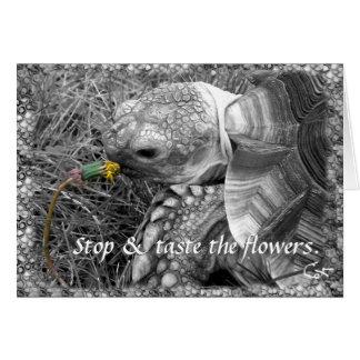 Tortue - arrêtez et goûtez les fleurs carte de vœux