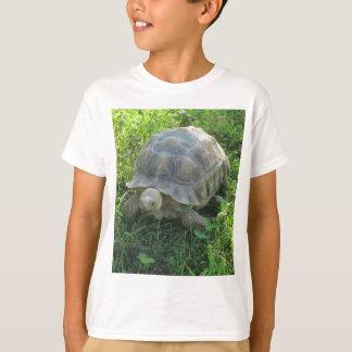Tortue dans l'herbe t-shirt