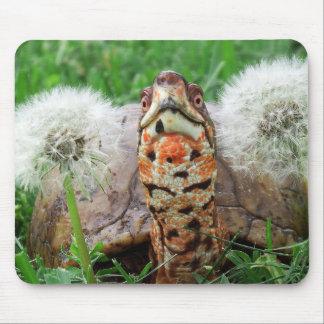 Tortue de boîte colorée tapis de souris