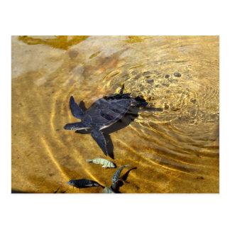 Tortue de mer en carte postale d'or des eaux