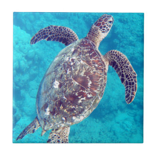Tortue de mer verte d'Hawaï Petit Carreau Carré