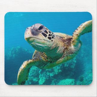 Tortue de mer verte nageant au-dessus du récif tapis de souris