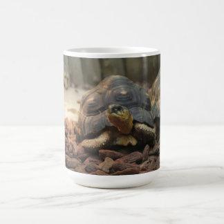 Tortue de terre mug