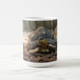 Tortue de terre mug blanc