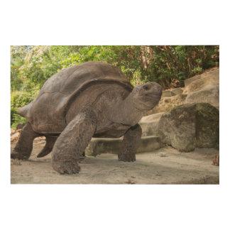 Tortue géante d'Aldabra Impression Sur Bois