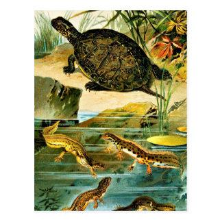 Tortues et dessin vintage de tritons cartes postales