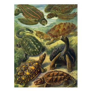 Tortues et tortues de mer vintages par Ernst Cartes Postales