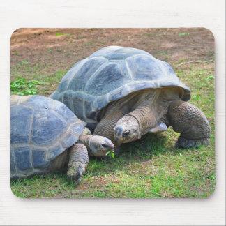 Tortues Mousepad d Aldabra Tapis De Souris