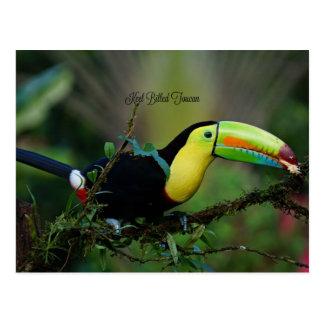 Toucan affiché par quille, oiseau tropical carte postale
