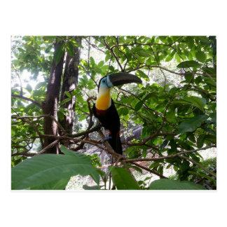 toucan Canal-affiché, carte postale du Trinidad
