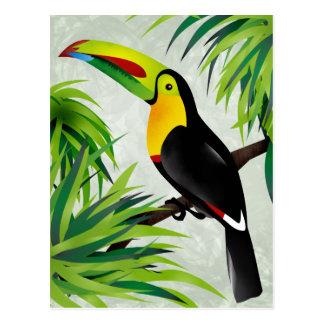 Toucan de jungle carte postale