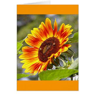 Tournesol et abeilles carte de vœux
