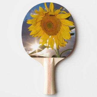 Tournesol hybride soufflant dans le vent au raquette de ping pong