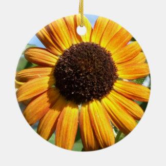 Tournesol impressionnant de beauté d automne dans décoration de noël