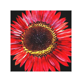 Tournesol rouge lumineux de beauté d automne sur l toiles tendues