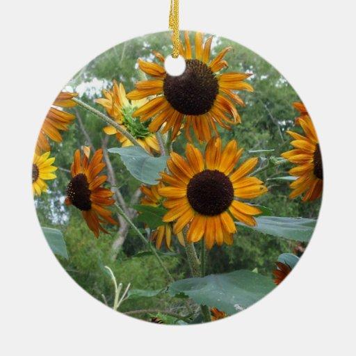 Tournesols de beauté d'automne dans le jardin décorations de noël