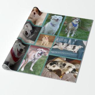 Tout le papier d'emballage de chien papier cadeau