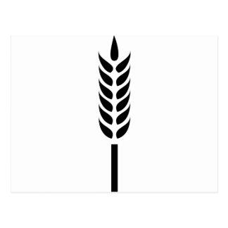 transitoire de blé de céréale carte postale