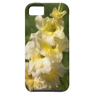 Transitoire jaune de fleur de glaïeul étui iPhone 5