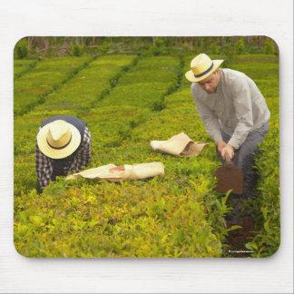 Travail dans les jardins de thé tapis de souris