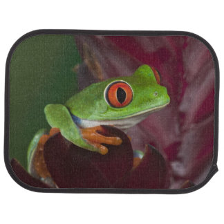 Treefrog aux yeux rouges tapis de sol